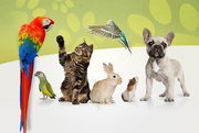 Best pets shop and accessories in Dehradun India