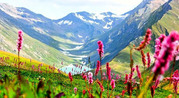 Valley of Flowers Trek with Trekveda